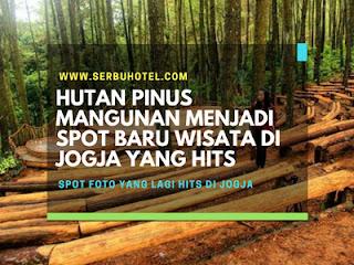 Hutan Pinus Mangunan Menjadi Spot Baru Wisata Di Jogja Yang Hits