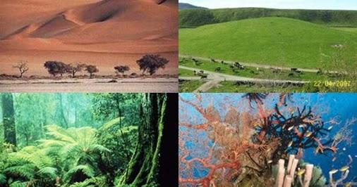 Pengertian, Komponen dan Macam-Macam Ekosistem   Materi ...