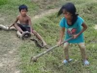 Demi Sesuap Nasi, Dua Bocah Ini Harus Mencari Ular Liar, Kisahnya Bikin Netizen Nangis