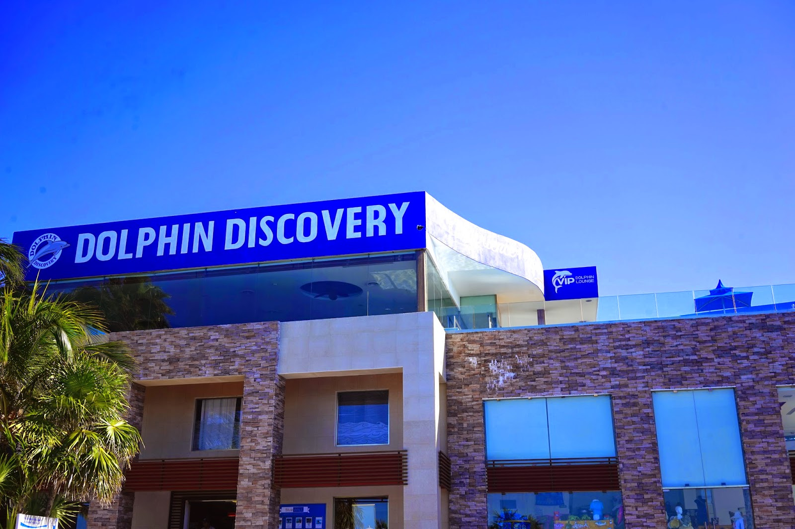 dolphin discovery mexico