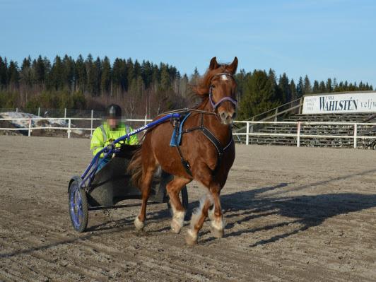Täydellinen hevonen