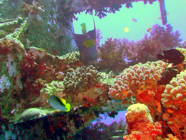wreck rosalie moeller, WW II, egypt, northern red sea