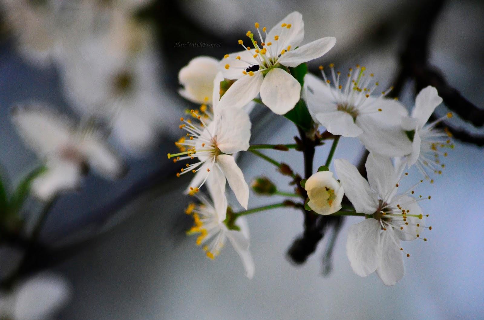 fotogafia | wiosna | makro | kwiaty