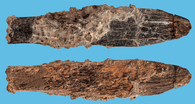 Bone knife from Morocco is oldest specialized tool associated with Aterian culture