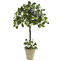 3' STEPHANOTIS TOPIARY W/PLANTER #6820