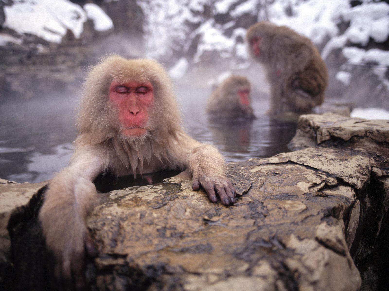 25 Cute Animals Taking Baths (25 Pics)