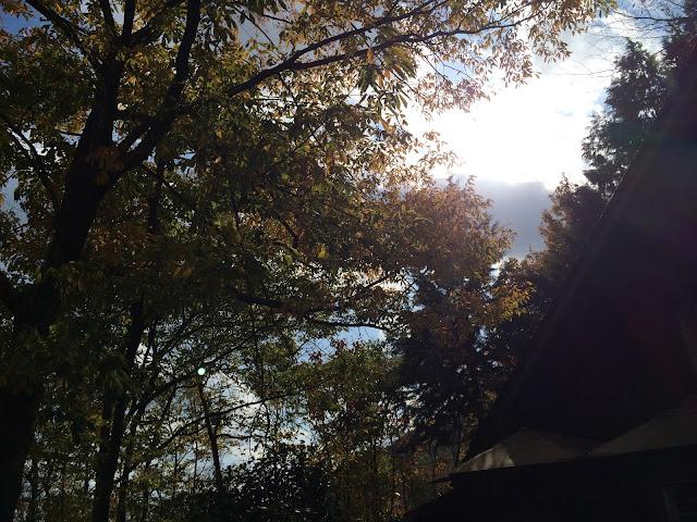 イメージ画像:秋の森