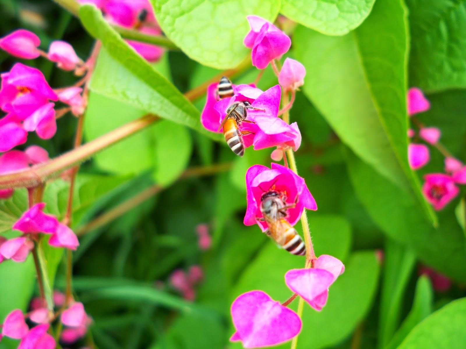 ผึ้งกับดอกไม้