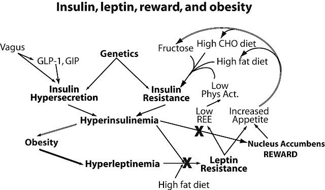 Resistensi Insulin dan Resistensi Leptin PCOs
