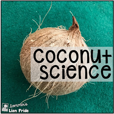 The science of coconut seeds. Exploring and investigating coconuts in Kindergarten.