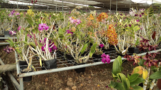 cultivos de orquideas Ecuagenera
