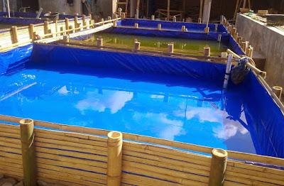 Kelebihan Budidaya Ikan Lele di Kolam Terpal