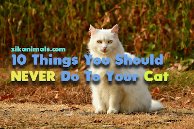 10 Things You Should NEVER Do To Your Cat