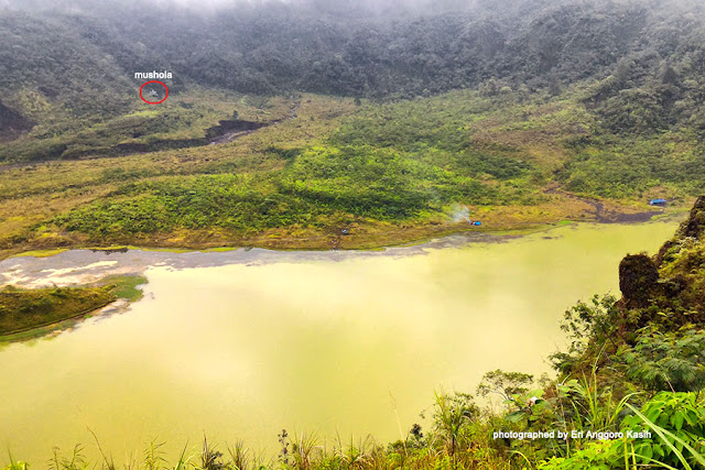 salah satu keunikan Gunung Galunggung adalah terdapat Mushola di dasar kawah Gunung Galunggung (dilingkari merah).