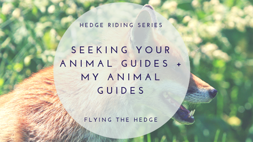 Seeking Your Animal Guides + My Animal Guides