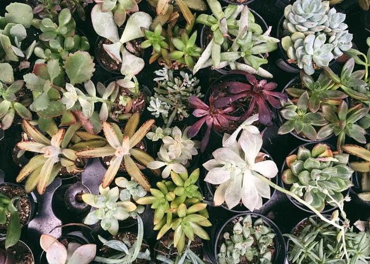Succulents // WWW.THEJOYBLOG.NET