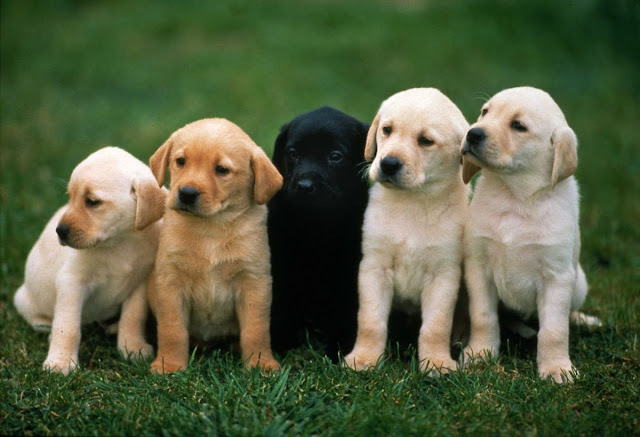 imena za pse