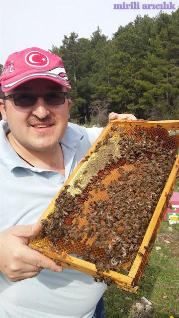 saf karniyol arısı almak istiyorum