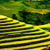 Mu Cang Chai - Natural masterpiece of the mountainous north of Vietnam