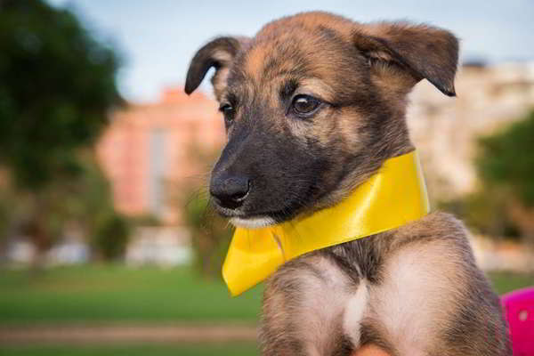 cachorro cruce de galgo