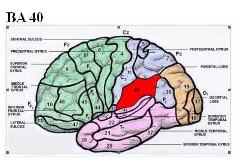 Neurofeedback: Der Blog über Neurofeedbacktherapie: August 2016