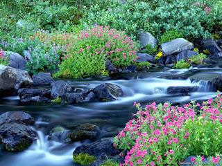 Beautiful Folwar Images