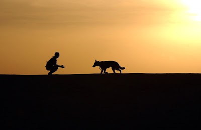 Respeto entre humanos y animales