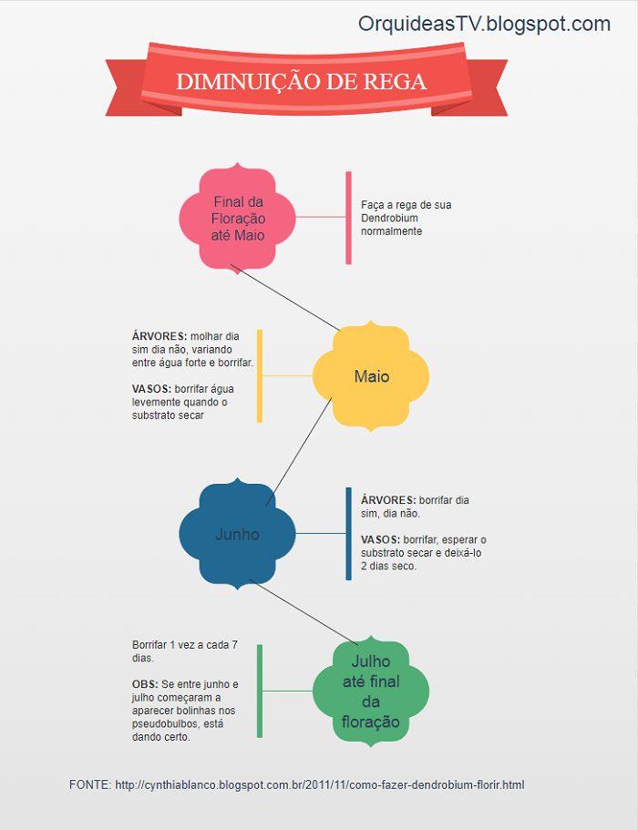 Infográfico - como fazer a dendrobium florir