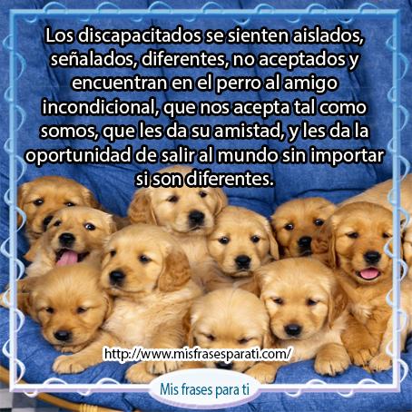 Cachorros En Venta Mis Frases Para Ti