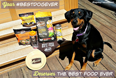 doberman mix puppy with Merrick dog food