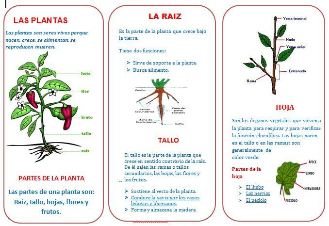 Tripticos listo para descargar triptico sobre las plantas for Cuales son las partes de un arbol