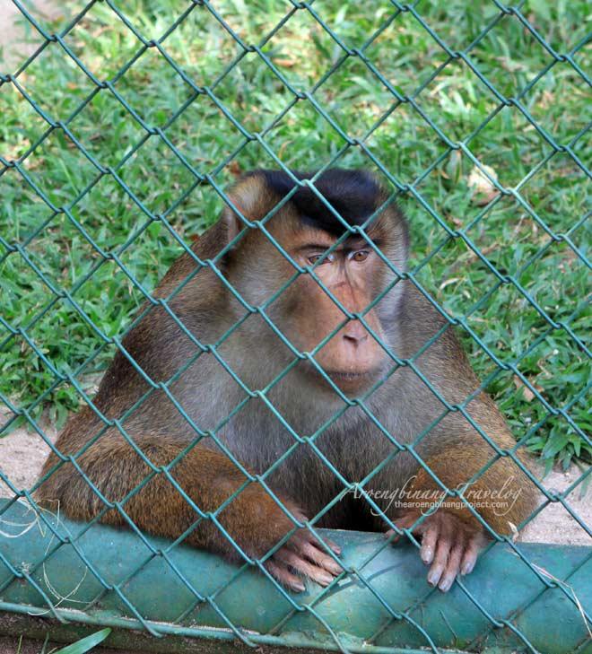 ragunan zoo jakarta