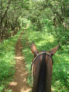 laukka, costa rica, riitta reissaa, ratsastusmatka