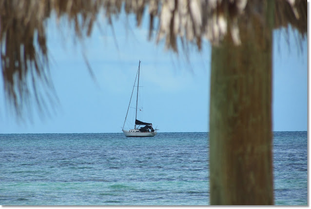 A view of sailboat sitting on abhor through overhanding palm leaves.