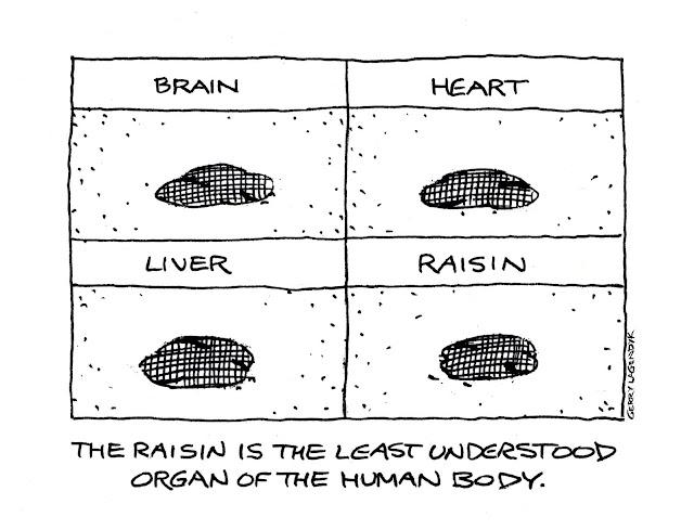 Stranger Than Truth, science cartoon, anatomy cartoon