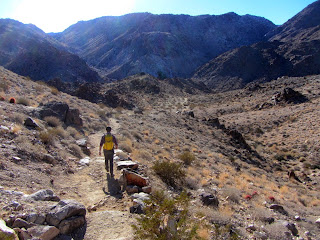 View south into Fortynine Palms Canyon, Joshua Tree National Park