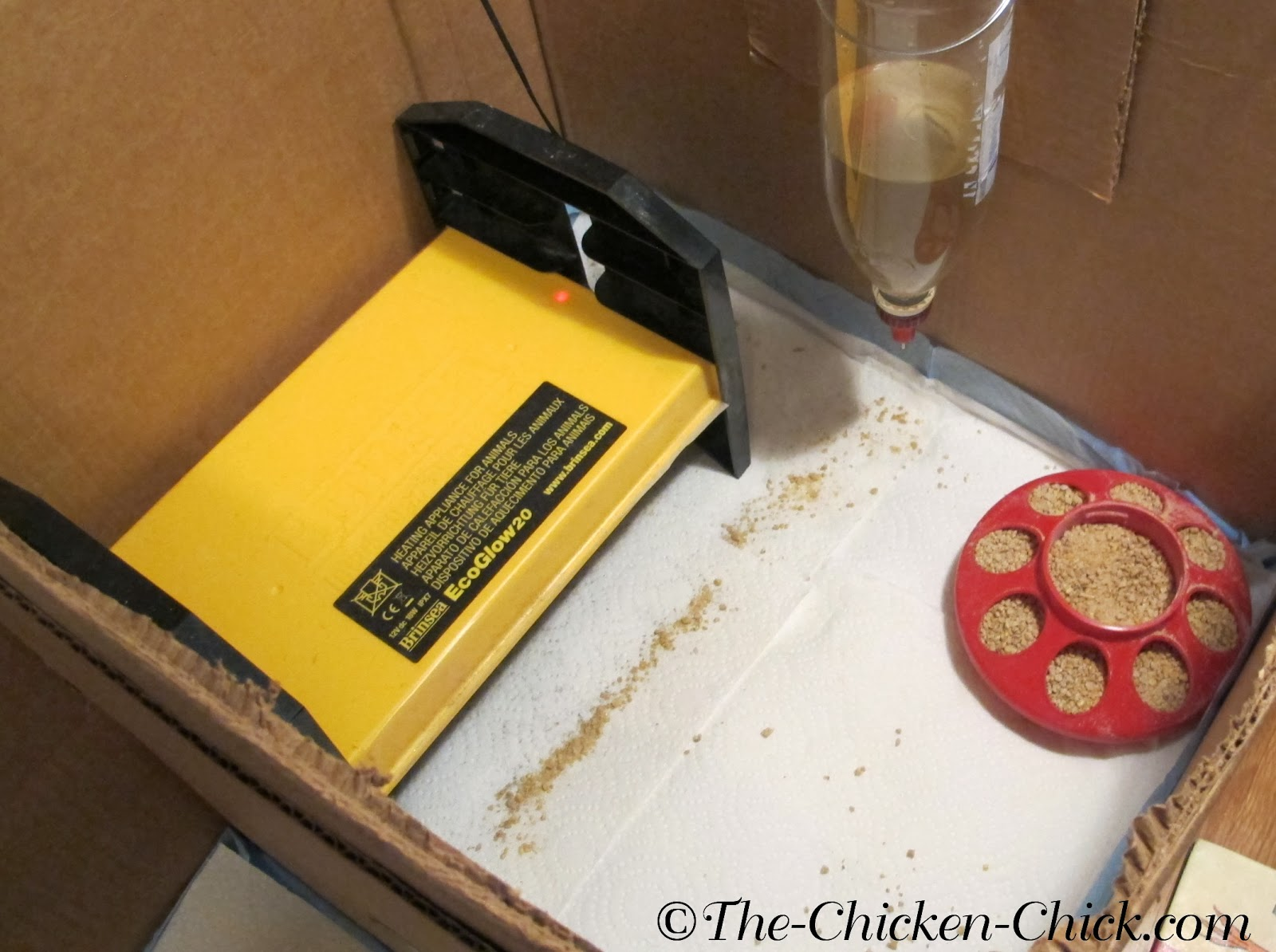Many, creative options can work for a brooder- the set-up is limited only by the imagination. Having brooded countless batches of baby chicks, my strong preference is the cardboard box.