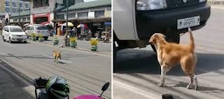 «Ραγίζει» καρδιές: Σκυλίτσα προσπαθεί να σταματήσει τα αυτοκίνητα ζητώντας βοήθεια για το κουτάβι της (βίντεο)
