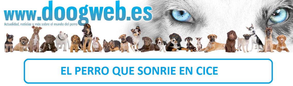 doogweb-el perro arcoiris sonrie en cice