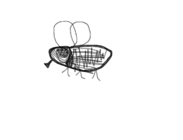 Een tekening van een vlieg