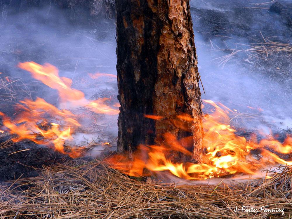 The Okanogan Highlands: Fire Ecology