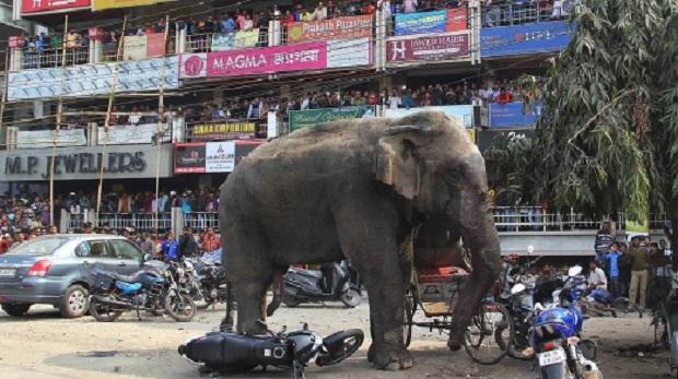 Gajah Naik Minyak, Lima Sekeluarga Termasuk Bayi Maut Dipijak