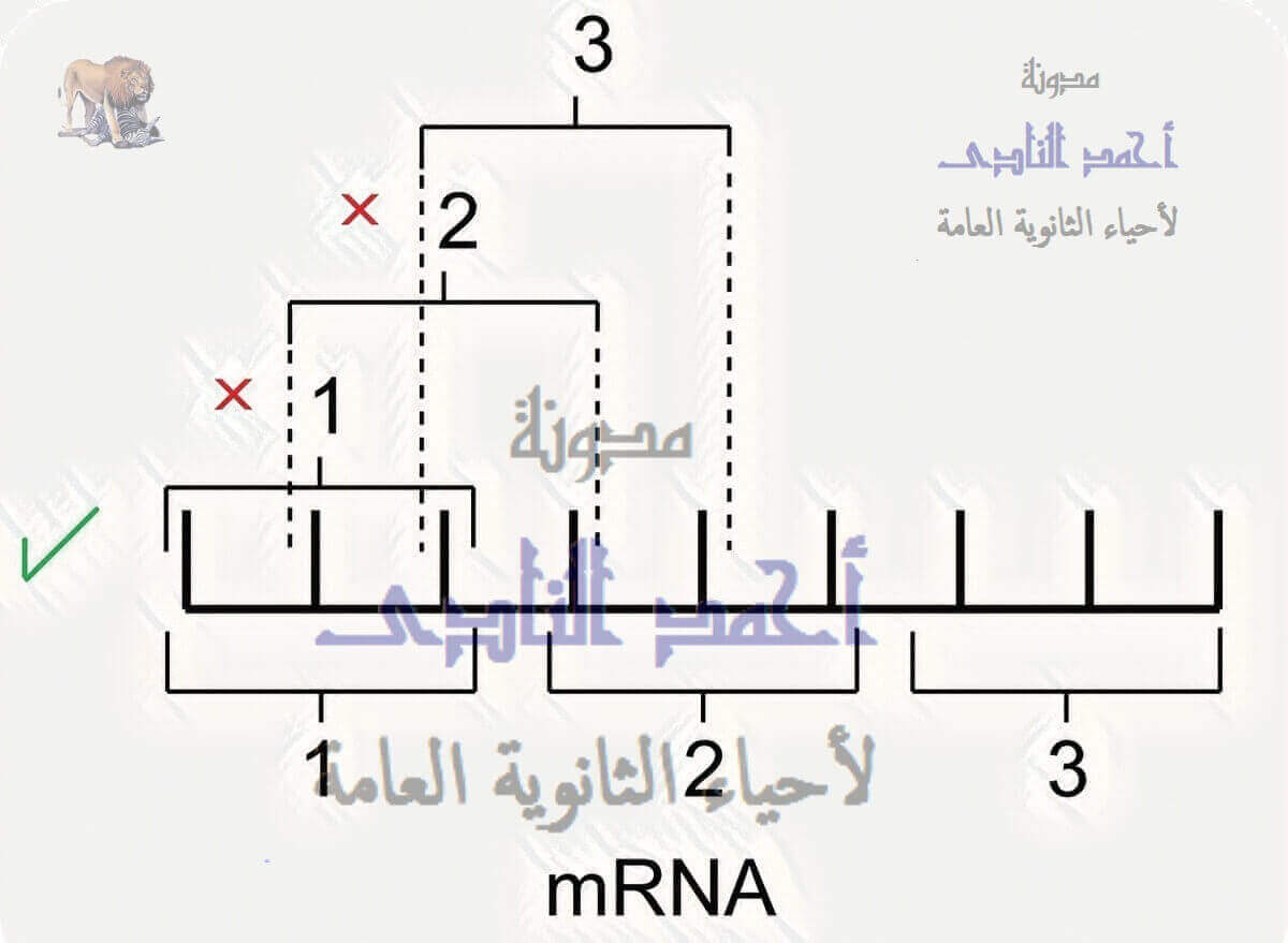 الجين – كودونات M.RNA – الشفرة الوراثية غير متداخلة - الثالث الثانوى