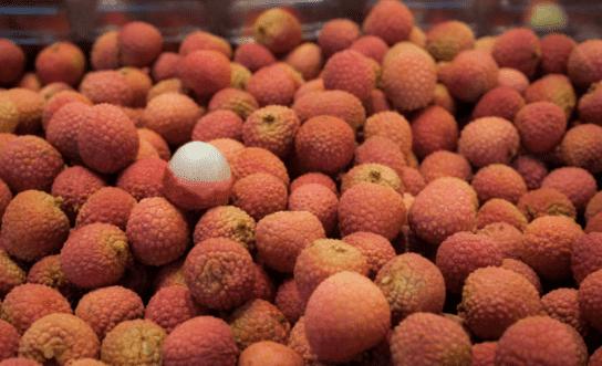 https://tipspetani.blogspot.com/2019/01/tips-singkat-menanam-buah-leci-si-buah.html