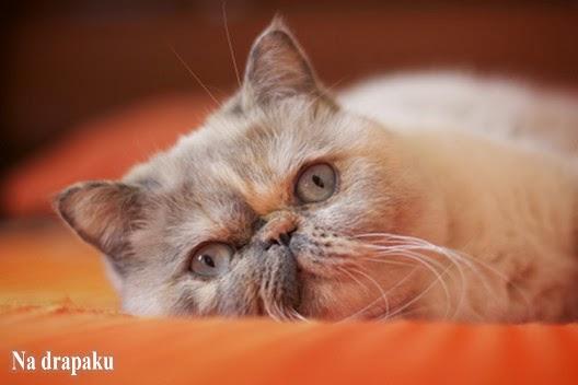 Gdzie postawić kuwetę dla kota?