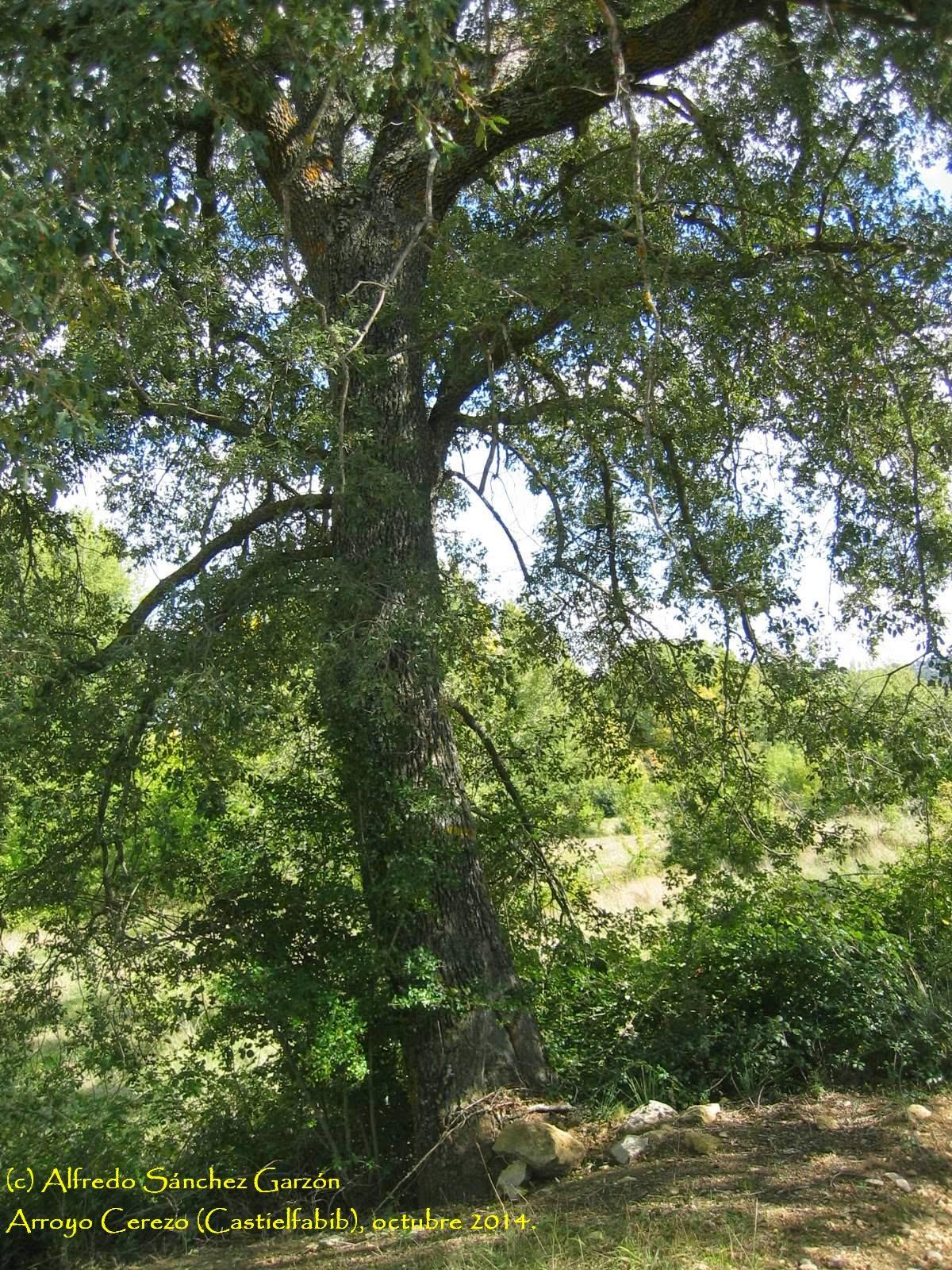 arroyo-cerezo-quercus-camino-cruz-tres-reinos