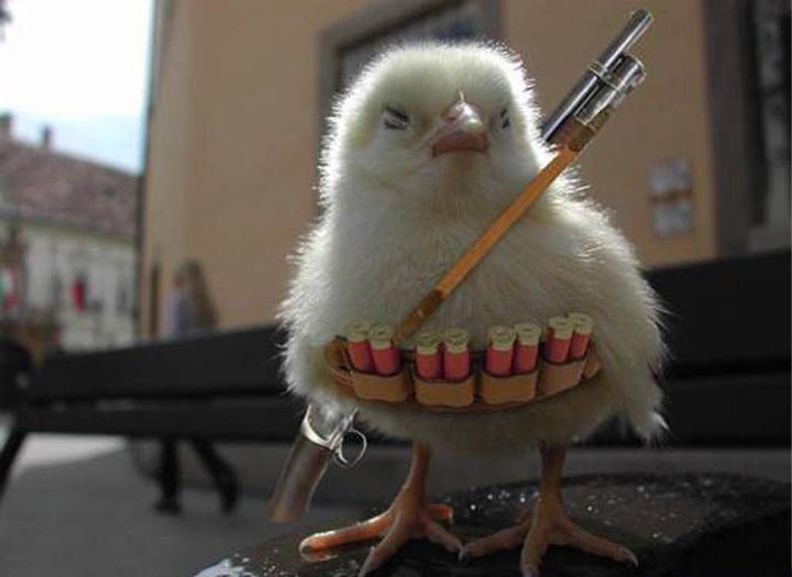 komik hayvan resimleri