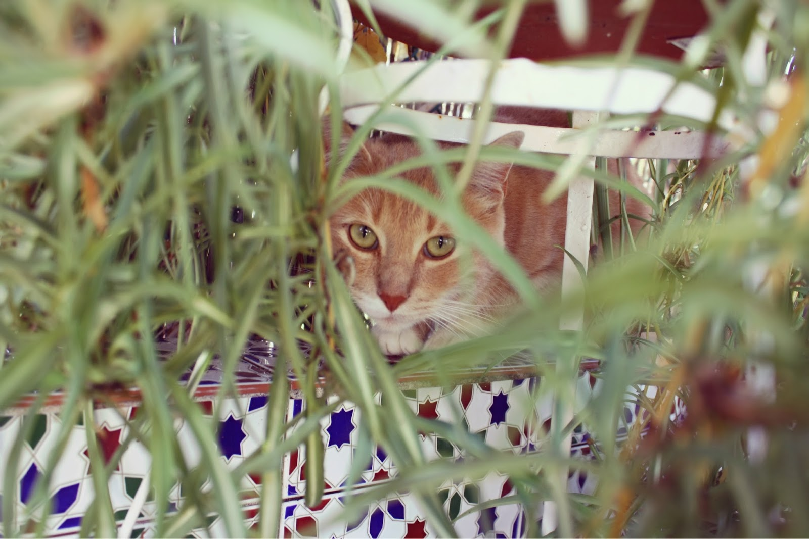 gato mirando a través de plantas