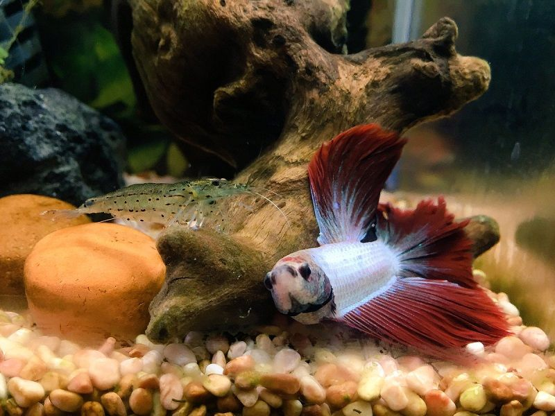 What to Do About Betta Fish Tank with Filter and Heater Before You Miss Your Chance