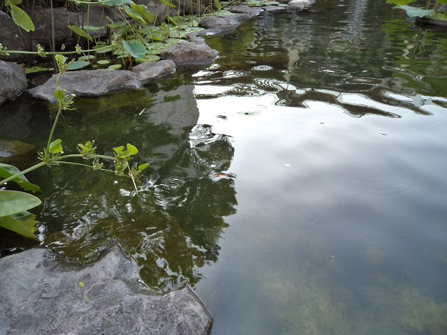 Image result for kolam ikan tidak terawat